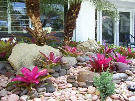 florida rock garden crie jardim como cultivar brom 233 lias