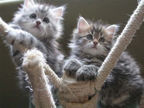 cat pictures amazing cats wallpapers cats pictures