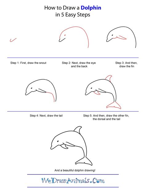 how to draw step by step how to draw a dolphin step by step the sea