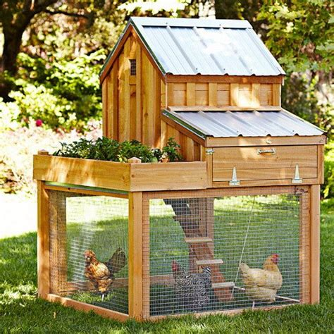 Denny Yam: Best chicken coop ground cover Must see