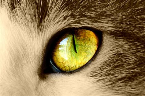 cat eye the amazing world of cat s eye macro photography