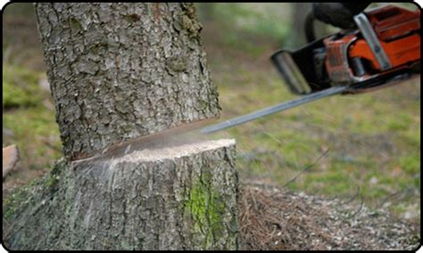 cutting tree tree cutting service