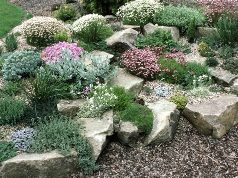 pictures of rock gardens planting a rock garden plants for rock gardens hgtv