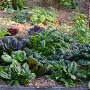 self sufficient vegetable garden salad greens in vegetable garden self sufficient culture