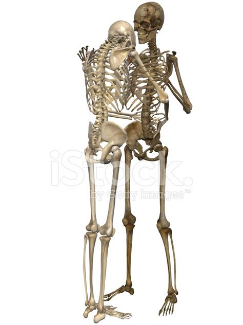 of skeleton skeletons friends for stock photos freeimages