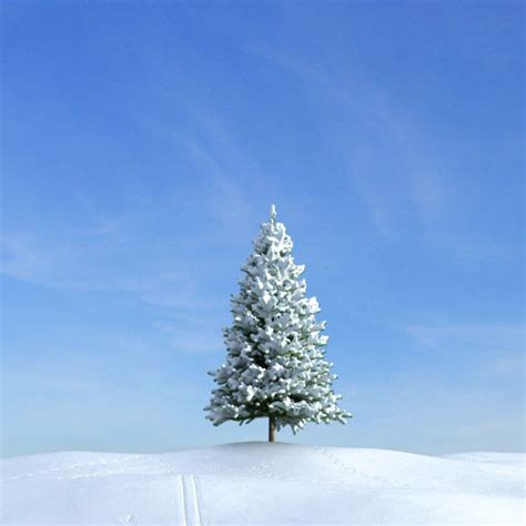 tree with snow fir tree with snow 3d model cgtrader