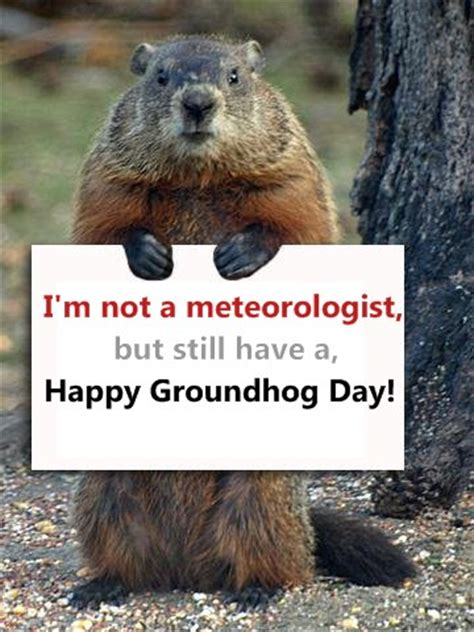 how to groundhog day happy groundhog day images wishes and pictures