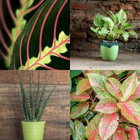 houseplants for low light conditions tropical house plants low light tropical house plant