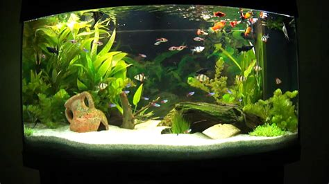 decoration aquarium eau douce photos