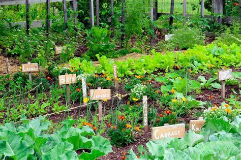 high yield vegetable garden 5 secrets of a high yield gardening vegetable gardening
