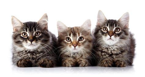 how to do a cat ceva expands distribution of catego for cats news