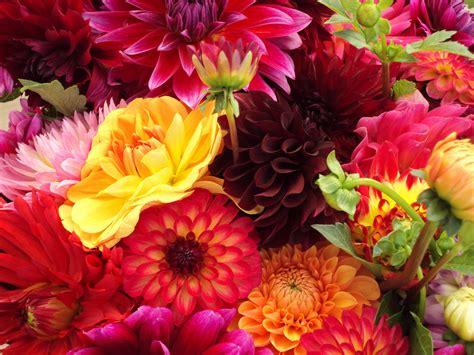 of flowers reasons to buy organic flowers gallery plant