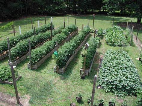 best vegetables for small garden 25 trending vegetable garden layouts ideas on
