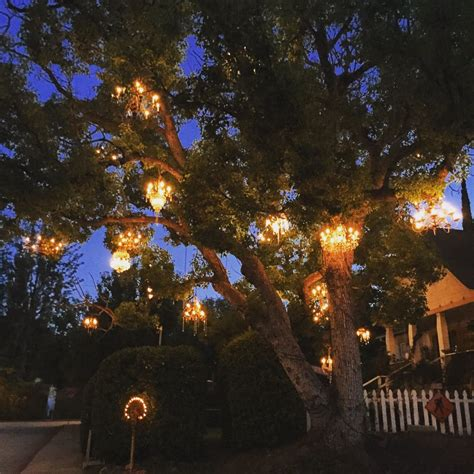 tree chandelier the chandelier tree yelp