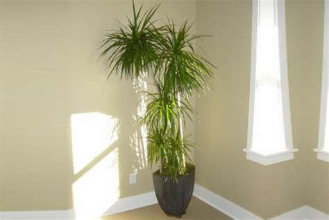 houseplants that don t need sunlight 28 that don t need light low light houseplants plants