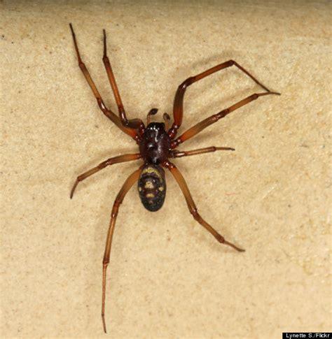 Garden Spider False Widow Mystery Spider Bite Causes Personal Trainer Nicky