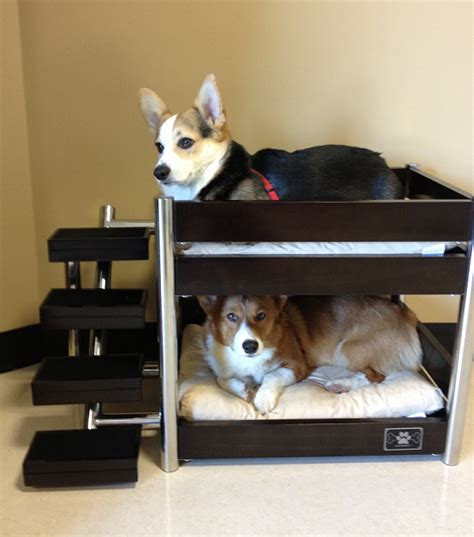 bunk bed buddies bunk bed buddies reed and the daily corgi