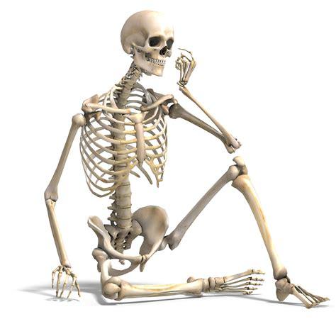 a skeleton interactive skeletal systemuvuqgwtrke