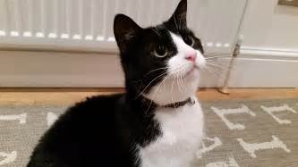 black and white cat ten reasons to black and white cats whitburn whiskers