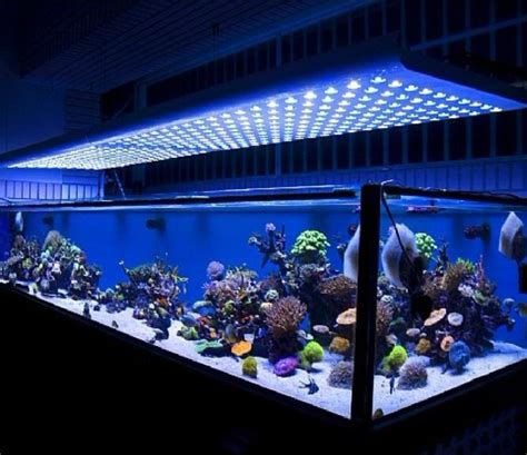 aquarium led lights 18 amazing led lighting ideas for your next project