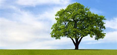 chagne trees the tree victor a leonard