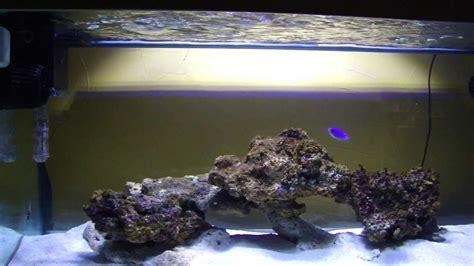 comment d 233 marrer un aquarium r 233 cifal