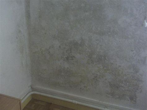 humedad paredes interiores reparar humedades en paredes interiores with reparar