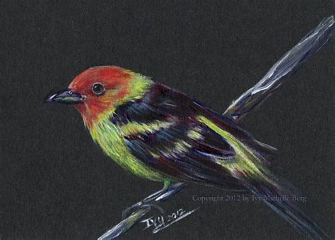 painting birds acrylic western tanager original acrylic bird painting by artbyivy