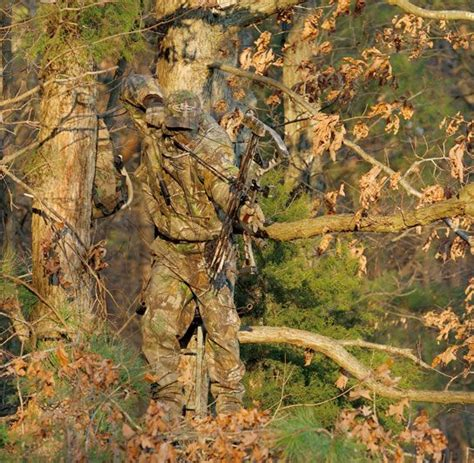 real tree for one of the realtree camo patterns in a