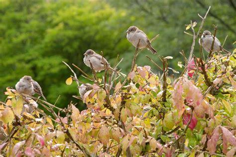 Garten Der Zuflucht by Gartengestaltungsideen Der Naturnahe Garten 187 Butenas