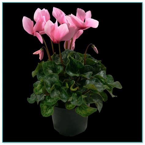 low light indoor flowers indoor flower plants low light