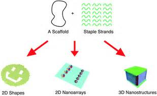 dna origami applications dna origami fold stick and beyond nanoscale rsc