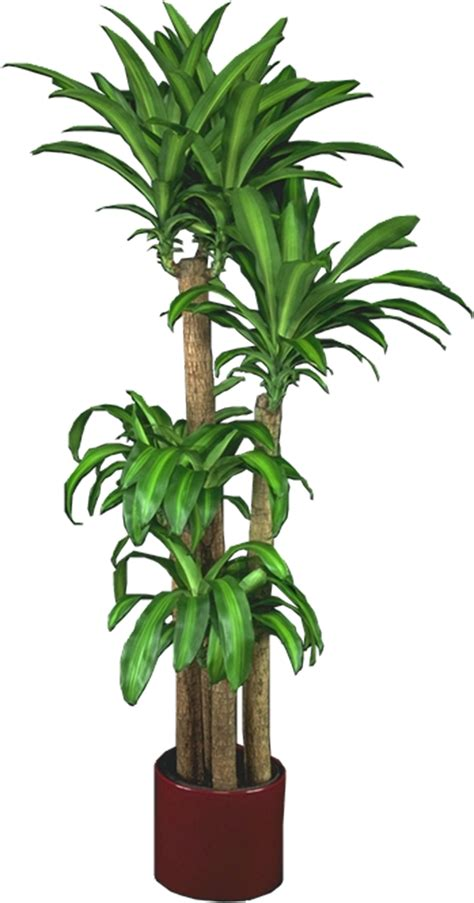 Plants Low Light pin house plants low light high humidity on pinterest