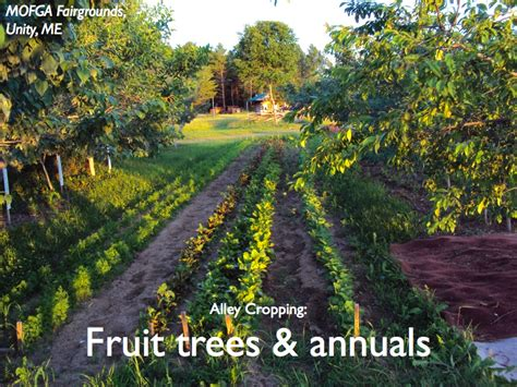 berry appleseed permaculture