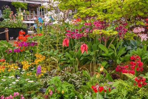 flower garden show new show gardens at rhs chelsea flower show 2015 rhs