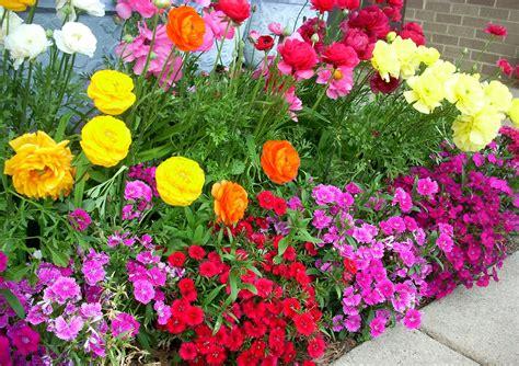 winter flower garden winter flowers for