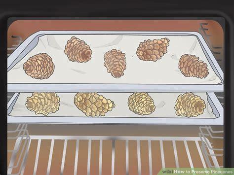 how to preserve pinecones pet animal how to preserve pinecones