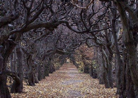 Im Garten Wuchs Der Baum by Hainbuche Alle Infos Zum Malerischsten Heimischen Baum
