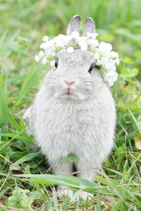 flower and bunny flower animals rabbits