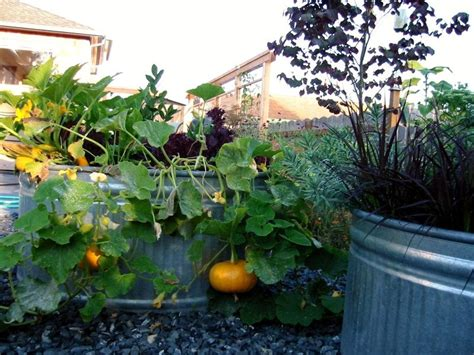 when to water vegetable garden two and a farm galvanized water tank trough
