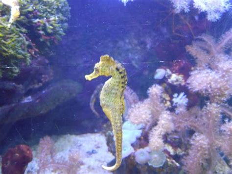 joli et color 233 picture of aquarium du cap d agde cap d agde tripadvisor