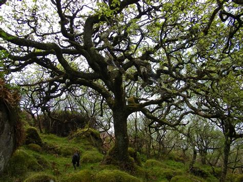 oak tree woodworking wildflowers of the isle of mull gallery seaview bed and