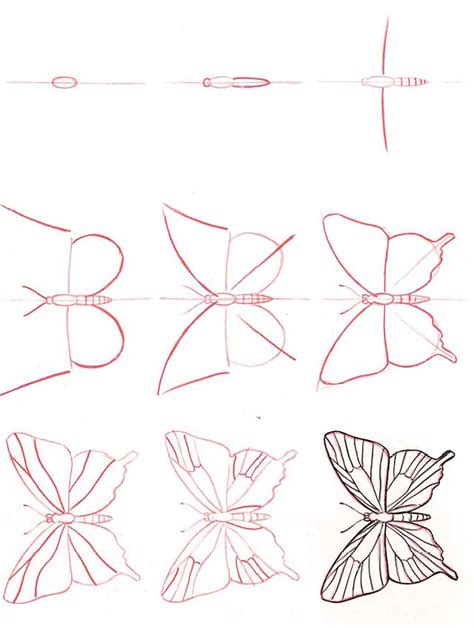 butterfly step by step butterfly lifeandhealth and health