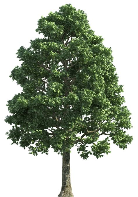 tree realistic image result for trees png 101 1 follage