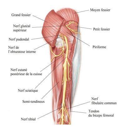 sciatique ou sciatalgie sympt 244 mes traitement exercices et rem 232 des
