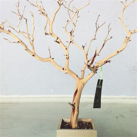how to make a jewelry tree out of wire 30 all tree jewelry holder jewelry organizer