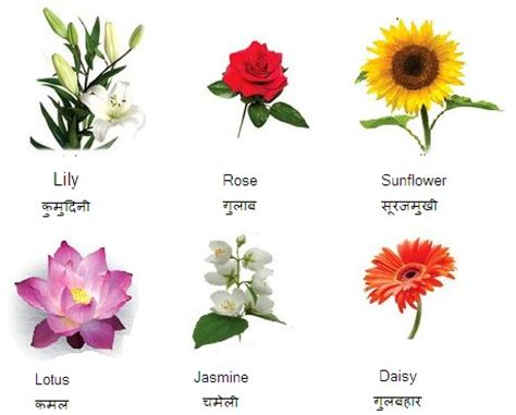 beautiful flowers names and pictures flowers name