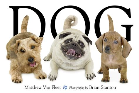 picture books about dogs book by matthew fleet brian stanton official