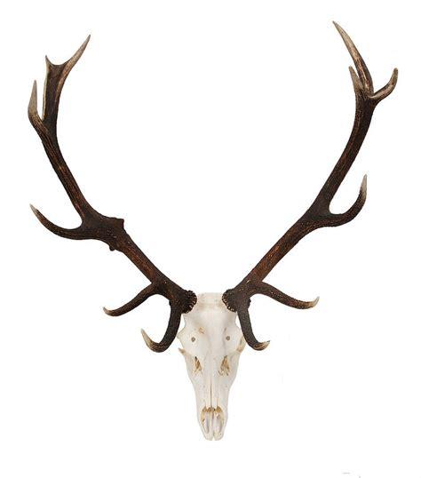 deer antler deer antler on skull by emilyhannah ltd