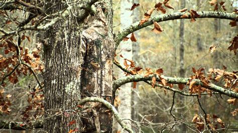 real tree for realtree 174 xtra camouflage it s all about you